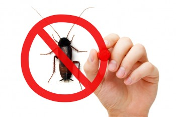 Your Complete Guide to Pest-Proofing This Fall